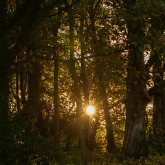 Sun through the trees (cams-not-in-lux) Tags: 1510 365alsorans holyisle isleofarran october onthisdayinhistory projects scotland uk locations sunrise