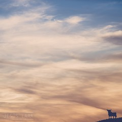 Nubes y Toro (jesuslara.net) Tags: espaa atardecer andaluca sundown cielo nubes toro fuengirola