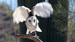 USA_D802868 (Drumsara) Tags: arizona usa southwest barn america desert tucson owl navajo fourcorners drumsara senoradesert