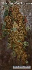 Giulio Cesare Prati Uva bianca olio su tela 120x60cm 1902