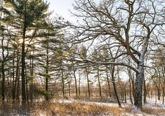winter morning (mariosworld343) Tags: morning trees winter light sun cold color nature season landscape outdoors nikon pretty natural 28mm d800