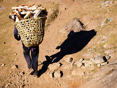 Forest on the move (whitworth images) Tags: wood nepal shadow man trekking outdoors person back asia basket himalaya khumbu everest sherpa firewood fuel carrying lukla solukhumbu
