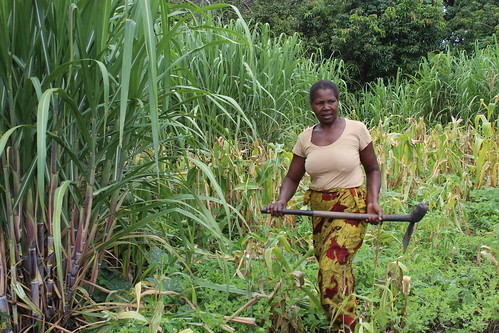 Pelekelo Mubuyaeta leaves her maize and sugar cane field at midday after working from 6am to prepare lunch for her family in the Barotse Floodplain, Zambia. Photo by Nixon Chisonga.