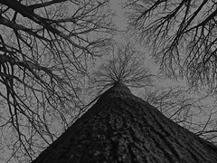TRUNKED ! (M7CCF STYLE! 2014) Tags: tree canon dark eos mono scary trunk weired 650d m7ccf