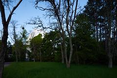 DSC03334 (qwz) Tags: park tree architecture dome crimea крым научный nauchnyi samyangts24