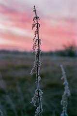 sunrise, reading, england 002 (missmckee) Tags: morning trees light sunset england sun color colour nature grass clouds sunrise 35mm canon reading countryside early skies open natural country explore colourful plains rise grassland film35mm canonfilm canonftb sunriser