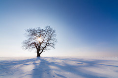 Once you merge with nature... (FAM Martin Z) Tags: winter sky holiday snow cold tree bavaria mauerstetten