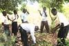 Kazi Mob Ngerenya