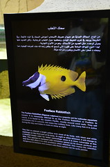 Signage for the Fox-face Rabbit Fish (oldandsolo) Tags: fauna abudhabi uae unitedarabemirates fishtank samhaabudhabi zoo zoologicalgardens emiratesparkzoo marineanimals aquaticanimals fish rabbitfish foxfacerabbitfish foxface foxfacelo siganusvulpinus signboard informationsign signage