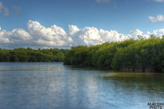 Mangroves (Bill Maksim Photography) Tags: road park camping trees people food storm beach water birds canon tampa keys photography hotel bay shark orlando alley nikon kayak tour nest florida miami hiking candid wildlife flamingo hurricane alligator royal motel off hike palm canoe manatee clear trail national swamp everglades cape panthers lightning cougar snakes largo eagles mountainlion d800 biscayne sighting maksim wintering ospey