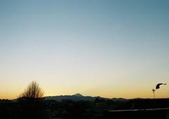 fuji and bird (ohimiro.) Tags: sunset sky bird film fuji olympus crow