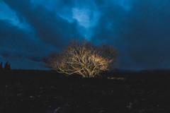 strobist tree (Franciscomateoo) Tags: canon landscape flash canonspeedlite strobist nostrobistinfo canon7d storbits removedfromstrobistpool seerule2