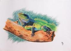 OPERE ALLIEVI (Laboratorio Artistico Mimina) Tags: drawing pastel iguana pittura corsodidisegno corsodidisegnopoglianomilanese laboratorioartisticopoglianomilanese
