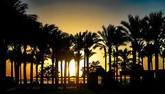 good morning (werner boehm *) Tags: sun beach strand sunrise egypt sonne sonnenaufgang gypten palmen wernerboehm