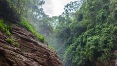 San Ramn - Junn - Per (Csar del Rio) Tags: trees wild verde green peru forest san selva bosque alta ramon vegetacion junin