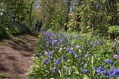 in the woods today (=Mirjam=) Tags: sunshine bluebells spring woods funday mei noordholland morningwalk odc 2016 sintmaartensvlotbrug hetwildrijk nikond750