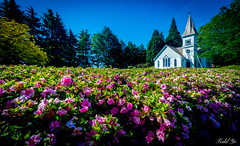 Lovely place  (T.ye) Tags: flowers plant church landscape azaleas angle small wide chapel flowerbed todd ye minoru ourdoor