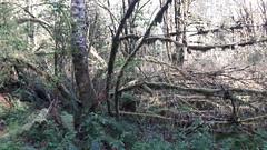 20160331_092638 (ks_bluechip) Tags: creek evans trails preserve sammamish usa2106