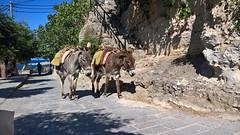 Asini a Lindos, Rodi (giugno 2016) (Matt FCSP Murphys) Tags: donkeys greece grecia rodos rodi lindos asini rodhos