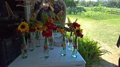 Sweetfields Farm (heytampa) Tags: flowers farm cokebottles sweetfieldsfarm