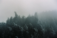 Landscape in the mist (moist memory) Tags: life travel trees mist mountain snow mountains film analog landscape lomo lomography nikon taiwan wanderlust analogue   fe2