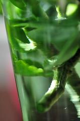 sticklingar i grön vas. (ros-marie) Tags: glas fotosondag fs160529