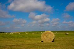 Hay Harvest (TPorter2006) Tags: wallpaper june texas grain harvest xp hay bales hillsboro 310 2016 aquilla tporter2006