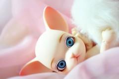 Pang-Ju - Jane (SoliAioli) Tags: pink blue white cute cat eyes doll dolls jane sweet blueeyes feather chiffon kitty ears groove bjd ju eyebrows pang pangju