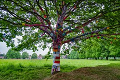 Yarn Tree front (alsib) Tags: colourful mayday yarntree yarnbomb fujixt1