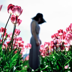 Tulip - Film Rolleiflex (Photo Alan) Tags: flowers people woman canada green 6x6 film field hat rolleiflex tulip rolleiflex28f carlzeiss vancoucer carlzeissplanar50mmf14