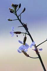 Existence (Michael Eickelmann) Tags: flowers macro nature live natur blossoms blumen makro leben existence blten existenz