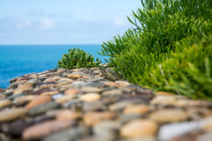 Ecole buissonnire (fidgi) Tags: blue green canon seaside dof vert lizard bleu pebble shore vegetation tamron biarritz lzard galet borddemer profondeurdechamp canoneos5dmk3