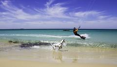 kite surf and dog (juanlu_rodriguez) Tags: espaa dog kite azul mar surf playa andalucia arena perro cielo nubes cadiz mirar kitesurf ola horizonte tarifa estrecho seguir dalmata estrechogibraltar campogibraltar
