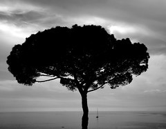 Coast tree (pjarc) Tags: camera sea sky bw italy costa white black tree silhouette june digital lens coast photo italian nikon europa europe mediterranean mediterraneo italia mare foto zoom 5 liguria cielo terre d200 nikkor vernazza giugno albero macchina biancoenero dx scatto 2016 18200mm allaperto nofullframe