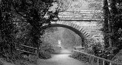 Under the Arches (TERRY KEARNEY) Tags: bridge flowers trees england urban blackandwhite dog dogs nature monochrome weather animal animals june skyline canon landscape daylight woods europe flickr day outdoor wildlife parks tunnel arches canine explore fields kearney wirral merseyside 2016 wirralway wirralcountrypark wirralmerseyside welshcollie thewirralway oneterry wirralpeninsular summer2016 canoneos1dmarkiv terrykearney cheshirefields june2016