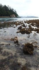 Mass coral bleaching at Big Sister's Island, 23 Jun 2016 (wildsingapore) Tags: nature island marine singapore underwater wildlife coastal threats intertidal seashore bleaching marinelife cnidaria wildsingapore scleractinia bigsistersisland