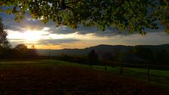 Sunset beneath my favorite tree (arborist.ch) Tags: tree baum treeclimbing arborist treecare baumpflege arboriculture