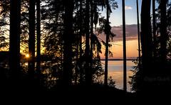 Volgo sunset (Oigen Quark) Tags: trees sunset sun lake nature silhouette clouds dark landscape evening sundown russia delight russian delightful volgo