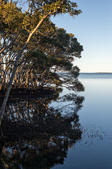 _CCF2499-Edit.jpg (carlopinarello) Tags: reflection nature water prime nikon df au australia mangrove qld queensland wynnum nikon50mmf18afs nl50f18