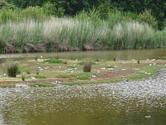 Marais de Kervilhen (mchub) Tags: nature bretagne marais saline morbihan hx400v