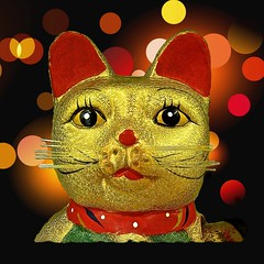 12 days.......happy kitty (muffett68 ) Tags: faces kitty sparkly glittery hss slidersunday picmonkey sc616