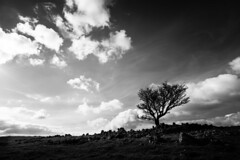 365A5098 (Nazgul 9) Tags: winter bw white black tree wales landscape south scene brecon beacons