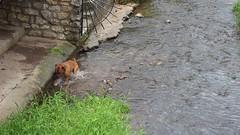 MVI_1786 (Chatillon-sur-Loire) Tags: france nature fauna loiret chatillonsurloire