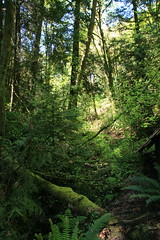 North Creek Forest (wildliferecreation) Tags: washington urbanforest bothell northcreekforest