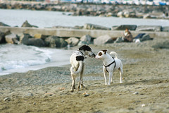 fare conoscenza (Maieutica) Tags: sea italy sun love dogs animals seaside sand kiss italia mare smell sole amore spiaggia animali bacio sabbia cani muso scogli annusare
