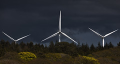 Slowly and Silently they came (explored) (yadrad) Tags: cornwall goonhilly turbines thelizard windturbines