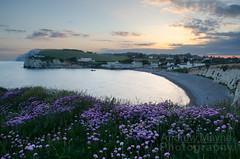 Freshwater Bay (Andrew Mayne Photography) Tags: pink flowers sunset landscape photography bay nikon andrew thrift isleofwight mayne freshwater iow