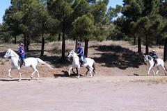 IV Raid Ecuestre Abla (Ayuntamiento Abla) Tags: caballos raid sierranevada ecuestre almeria alpujarra abla hipica
