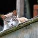 Feral Cat On The Cat Condo