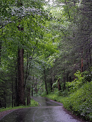 IMGPG15624 - Great Smoky Mountains National Park (David L. Black) Tags: nationalparks greatsmokymountainsnationalpark